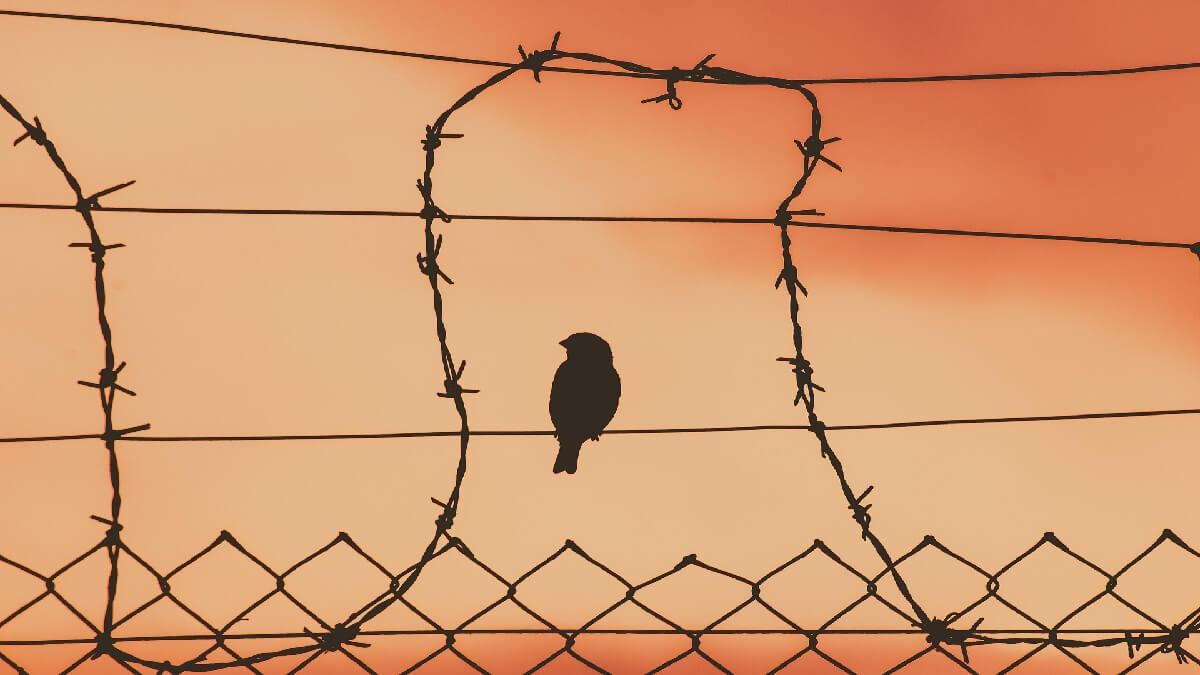 羈押要件你清楚了嗎?若要停止羈押須具備哪些條件?