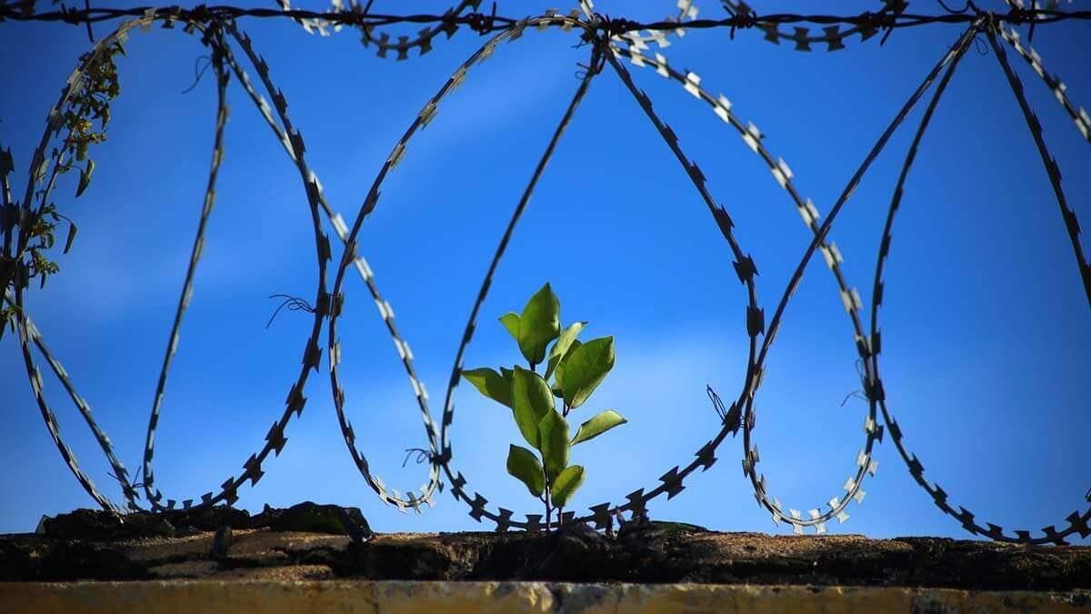 羈押禁見大約多久?一次了解羈押禁見生活、法條與期限查詢